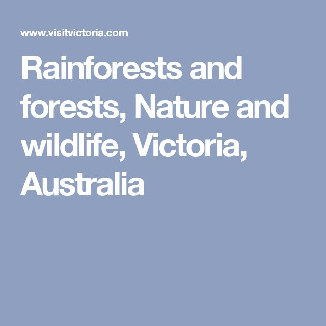 Rainforests and forests, Nature and wildlife, Victoria, Australia