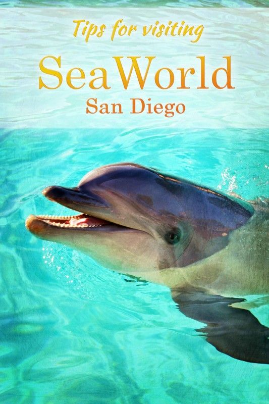 Is SeaWorld San Diego right for your family? A behind-the-scenes look at the park, plus tips for making the most of your day.