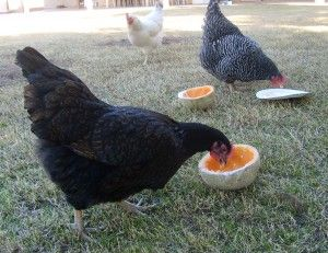 My girls love melon and will eat it seeds and all, leaving nothing but the thin lace shell of the cantalope