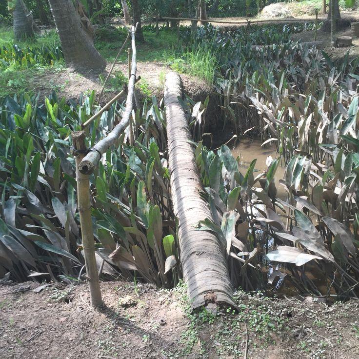 Monkey bridge in Ben Tre