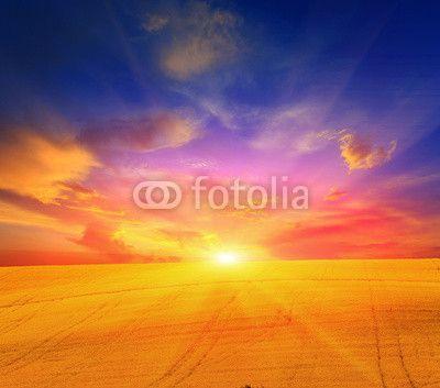 rape field and sunset sky ©Pavel Klimenko