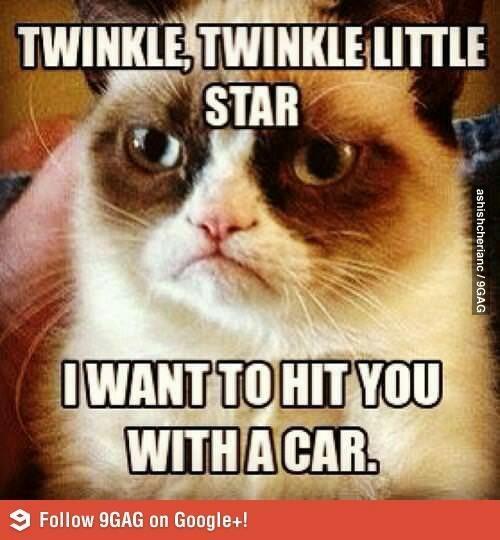 Mad cat LOL