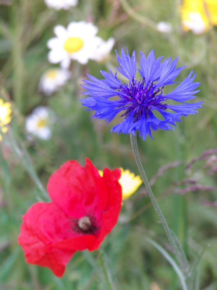 Meadow Flowers (June 2015) Photography