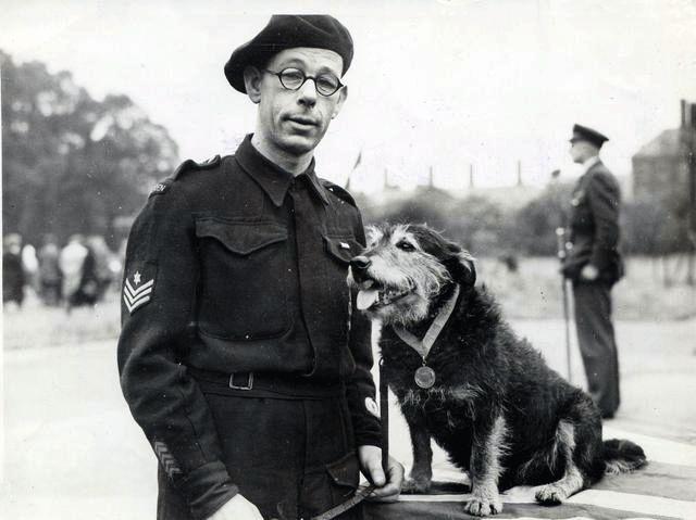 Rip, perro mezcla de razas terrier, que fue galardonado con la Medalla Dickin al valor en 1945