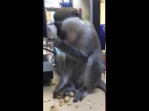 SUPER FUNNY CRAZY WILD ANIMALS and BIRDS compilation 2015. FUNNY CUTE MO...