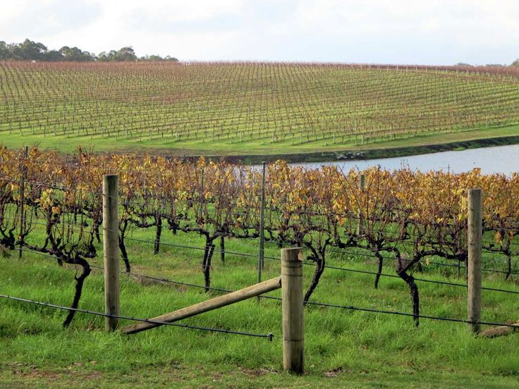 Wineries such as Aravina Estate abound in the Margaret River Region of Western Australia.