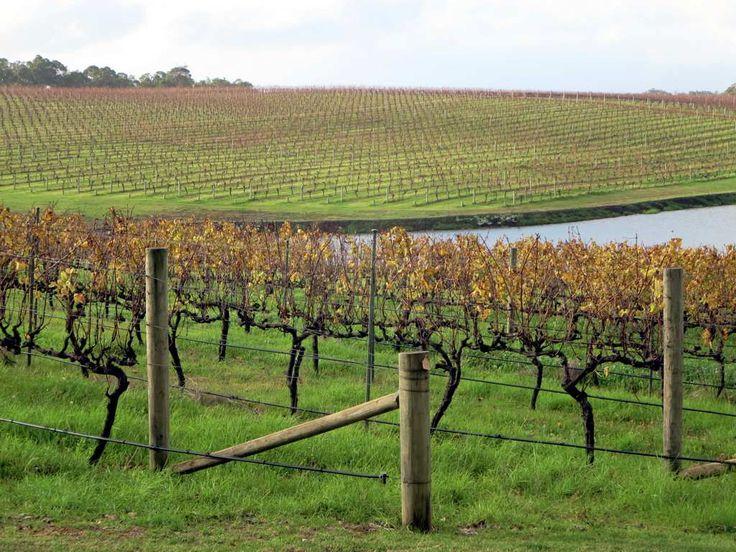 Wineries such as Aravina Estate abound in the Margaret River Region of Western Australia.