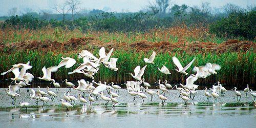 Nature Park: Mai Po Nature Reserve