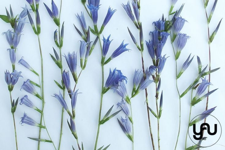 flori albastre texturi vegetale_vegetal patterns_yauconcept_elenatoader (1)