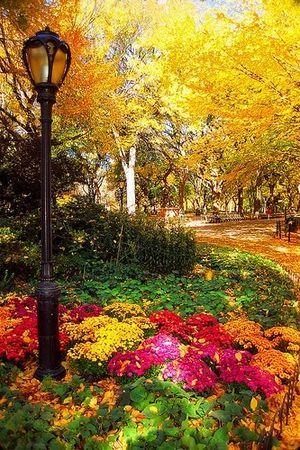 アメリカ ニューヨークのセントラル・パーク Central Park of New York, USA