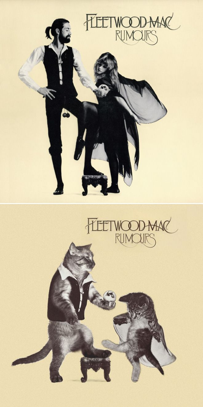 Iconic Album Covers Recreated With Kittens In 2020 Classic Album Covers Iconic Album Covers Album Covers