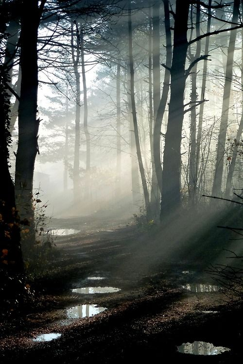 """""""Suddenly a mist fell from my eyes and I knew the way I had to take."""" Edvard Grieg"""