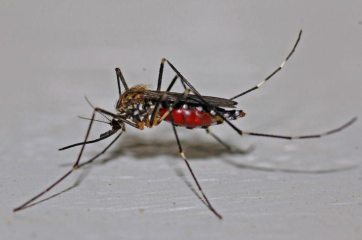Hola amigas y amigos de Farmacia Palomeque. Hoy os traemos un post en el que os hablamos de un pequeño insecto que nos causa más de un quebradero de cabeza en #verano. El protagonista de nuestro post de hoy es el #mosquito y las molestias de sus #picaduras. Esperamos que os guste http://farmaciapalomeque.es/blog/como-evitar-las-molestias-de-la-picadura-de-mosquito/