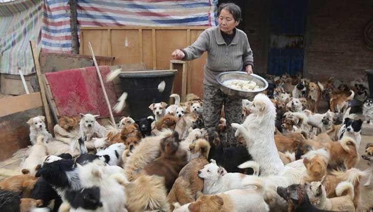 Esta Anciana Tiene 1,300 Adorables Razones Para Levantarse Todos Los Días A Las 4 De La Mañana - En un gesto de enorme bondad y ternura, cinco ancianas asumieron la tarea de darle amor a un grupo de perros callejeros.  Pero lo más impresionante viene cuando uno conoce la cantidad de perros a los que cuidan: ¡Son más de 1.300 perros!  Asegurarse de que todos ellos estén bien alimentados no es... #animales, #vive=Personas,animales,lavidaytodossussecuaces.  http://www.v
