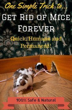 Get rid of mice in your house without killing them - quick, humane and permanent