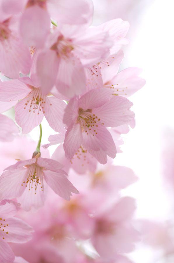 Beautiful pink flowers | Photography - Flowers | Pinterest