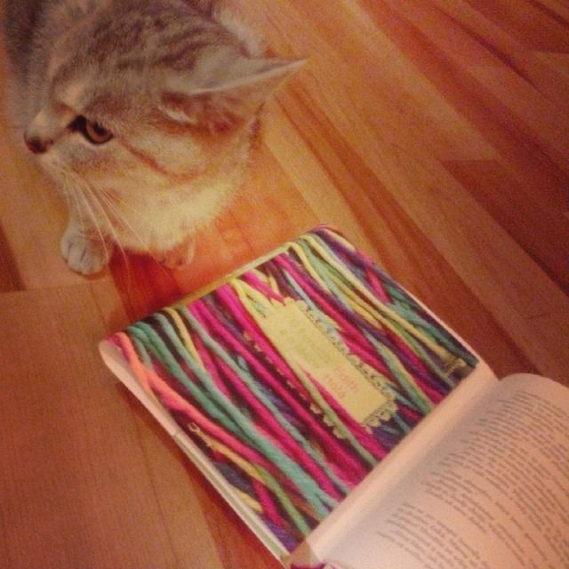 Our cat with my book.
