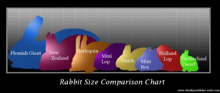 Mini Rex Rabbit Color Chart | , and easy to care for breeds such as mini lops, lion heads, mini rex ...