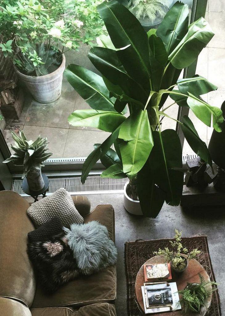 78 mejores ideas sobre plantas de banano en pinterest for Banano de jardin