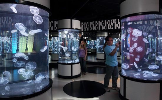 """The Jellies Experience,"" Monterey Bay Aquarium, open through September 2014"