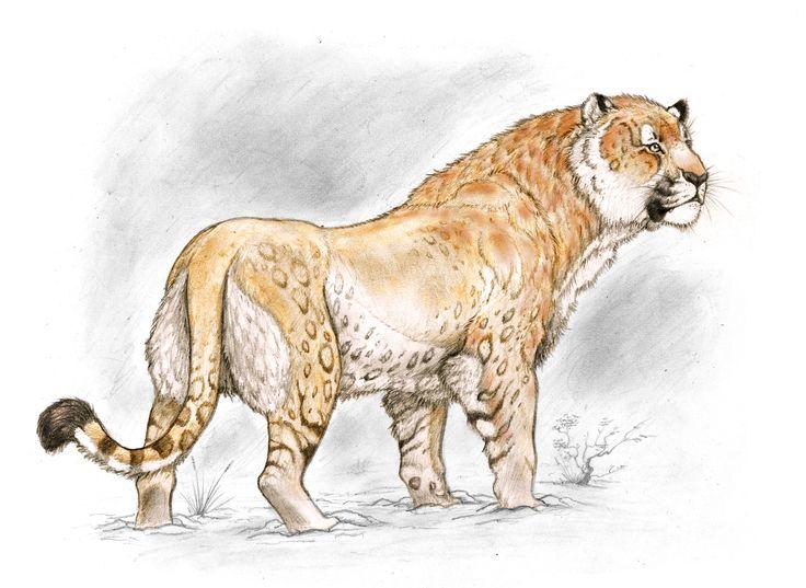 American Lion from Patagonia by Sebastián Rozadilla