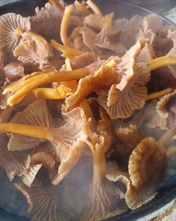 Suppilovahverot pannulla. #suppilovahvero #sieni #itsetehty #ruokablogi #ruoka#kotiruoka #herkkusuu #lautasella #Herkkusuunlautasella#ruokasuomi