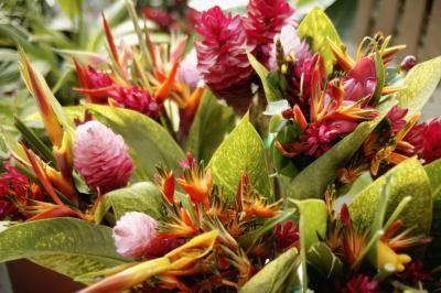 Flores tropicais: coloridas e exuberantes!