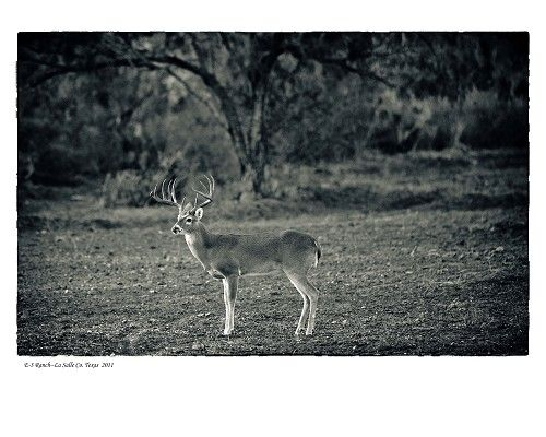 """""""E3 Ranch, La Salle County, TX"""" by Tommy Lavergne, digital photographic print, 2011, 16""""x20"""" www.thornwoodgallery.com"""