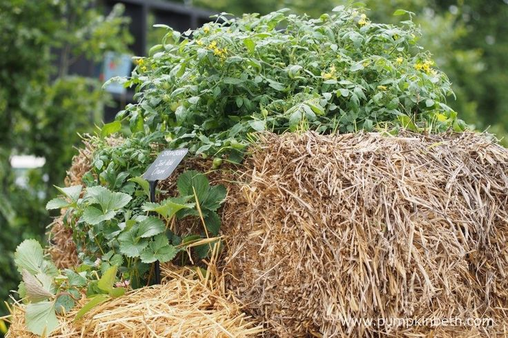 Straw Bale Gardening was a feature of the RHS Kitchen Garden, at the RHS Hampton Court Palace Flower Show 2017.