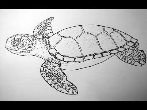 How To Draw A Baby Green Turtle And A Ghost Crab Youtube Crab Tattoo Green Turtle Geometric Tattoo