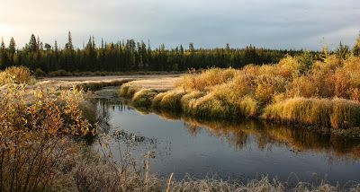 Fall colours on the meadow