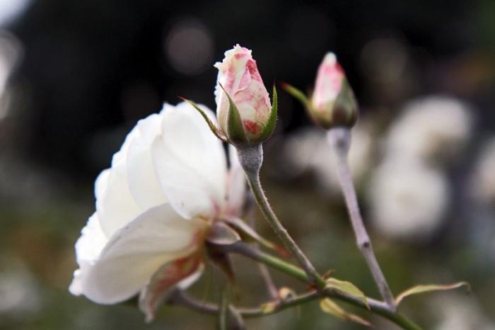 Blossom. Kiitos Hyvää   Trendi
