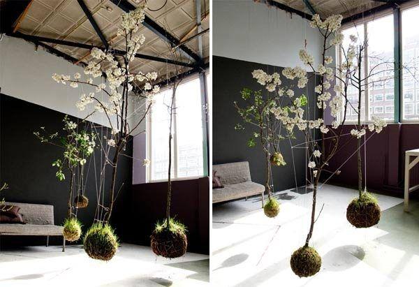 Möchte Man Eine Blumenampel Selber Machen, Muss Man Sich Erstmal Für Eine  Bestimmte Grünpflanze Oder Blume Entscheiden. Pflanzenarten, Die Nach Unten