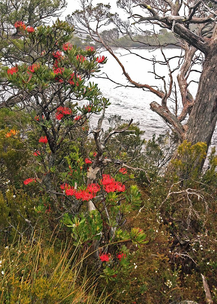 Tasmanian Waratahs at Dove Lake
