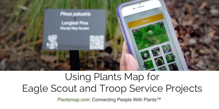 Frequently asked questions about using Plants Map for Eagle Scout Merit Badges, troop service projects, tree trail maps, or plant identification tags.