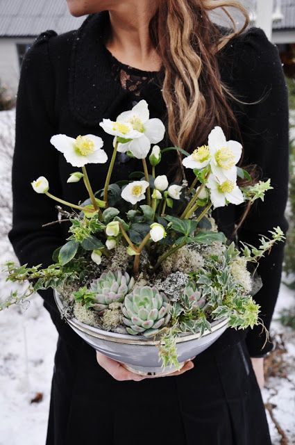 Christmas Decor - hellebores and succulents
