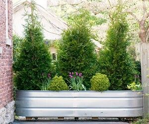 Privacy planter on wheels