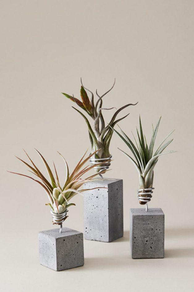 Luftplanzen Set als schöne Tisch-Dekoration oder Wohndeko, Betonvase für Pflanzen // concrete planter for air plants made by Evrgreen via DaWanda.com