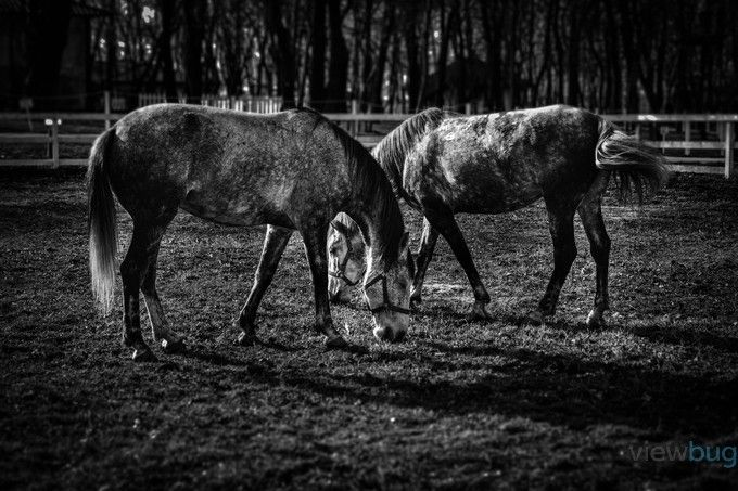 """Horses"" by Andrei_Solomon has received special recognition. http://www.viewbug.com/photo/64564865"