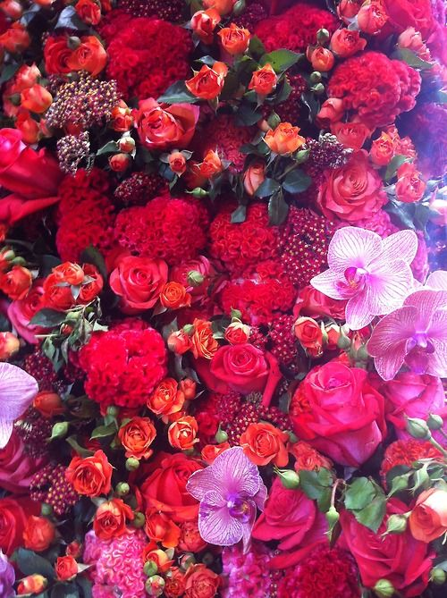 254forest:    PIERRE WAS IN THE RED SALON AT DIOR COUTURE SHOW  AMAZING FLOWER WALLS