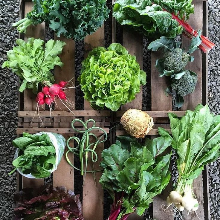 """QUIZ- What do we have on this palette??? Be specific """"Salad"""" is not enough #vegetables #vegan credit(IG) @workinghandsfarm . Want to be part of our community feed? Tag your best urban gardening pics with #urbangardenersrepublic to be featured and click the LINK IN OUR BIO to be informed of our BLOGs launch! . #communitygarden #organicgarden #Growfoodnotlawns #organicgardening #growyourownfood #farmtotable #growyourown #vegetable #harvest #urbangarden #urbanfarming #urbanfarm #urbangardening…"""