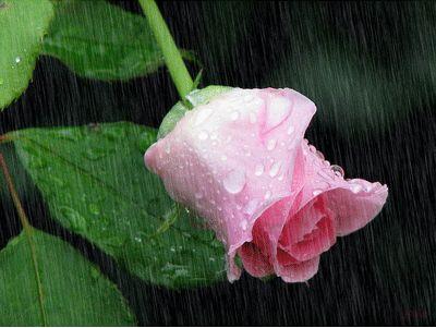 Gifs , Mensagens e Imagens :: Resultados da pesquisa chuva