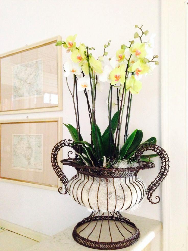Orchidee a Cortegondina La Morra