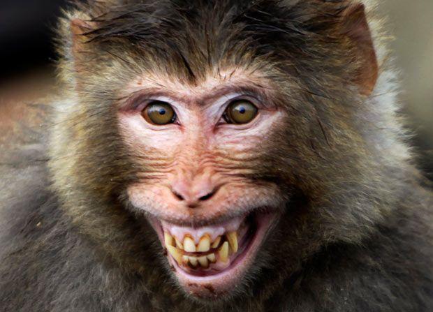 Motobécane 1987 F5783256114a53df2a910827a00f40ba--funny-monkeys-facial-expressions