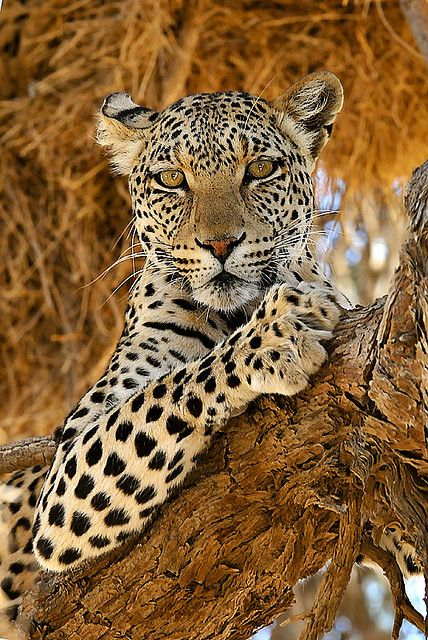 this-is-wild: (via Princess in the tree | Flickr - Photo Sharing!)