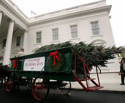An 18-foot-tall tree is delivered to the White House