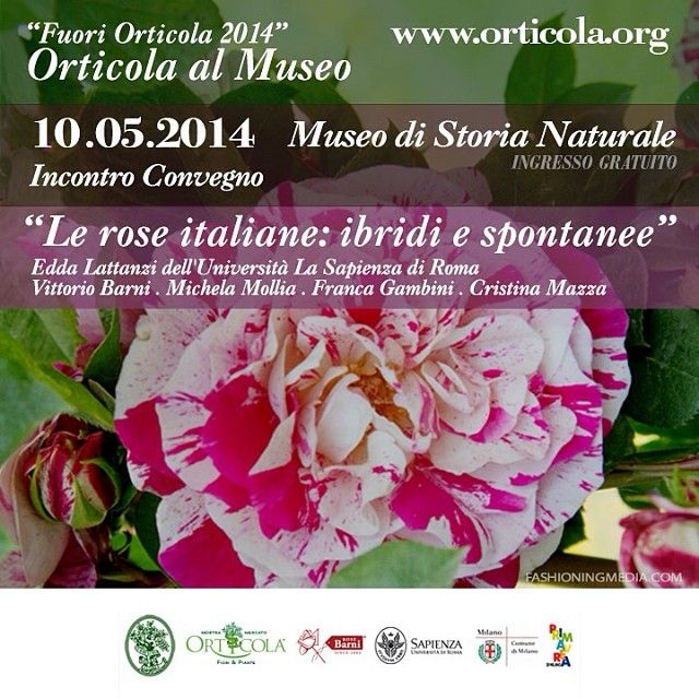 Hybrid #Italian #rose