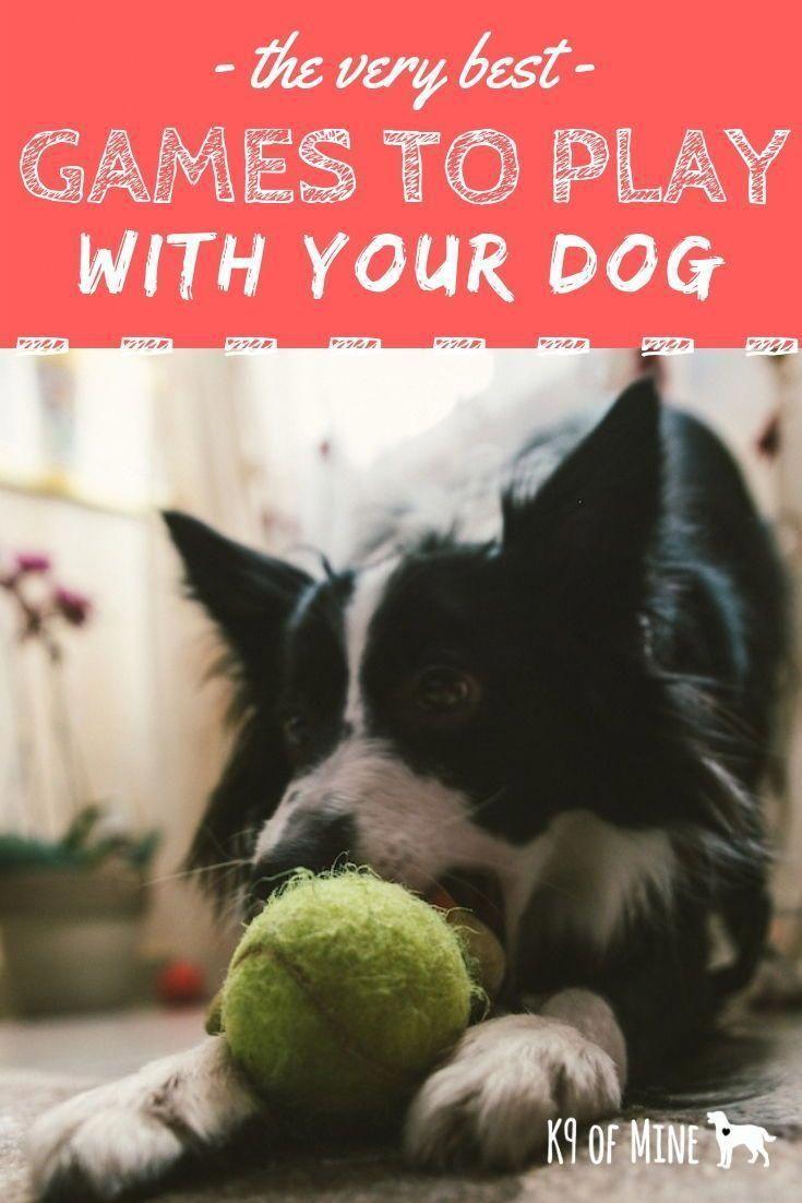 Pastorale #Hunde #Fotografie #Hund #SpielzeugHundeZubehör
