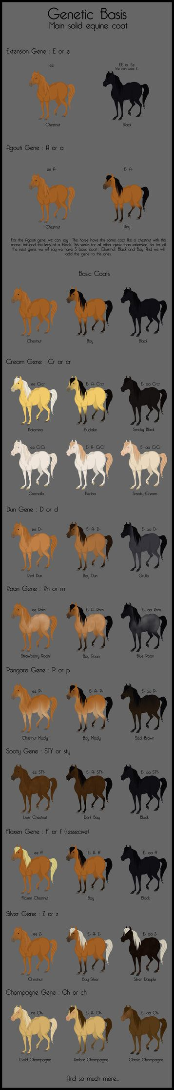 DeviantArt: More Collections Like Chestnut Color Genetics Chart by MagicWindsStables