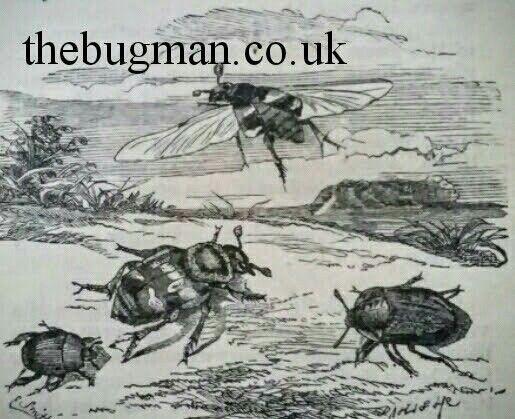 Thebugman.co.uk